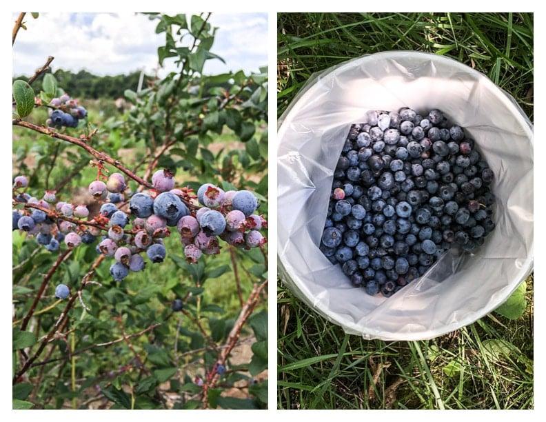 Frozen Blueberry Mojito | saltedplains.com