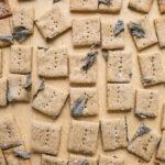 Savory Oat Crackers recipe (gluten-free) | saltedplains.com